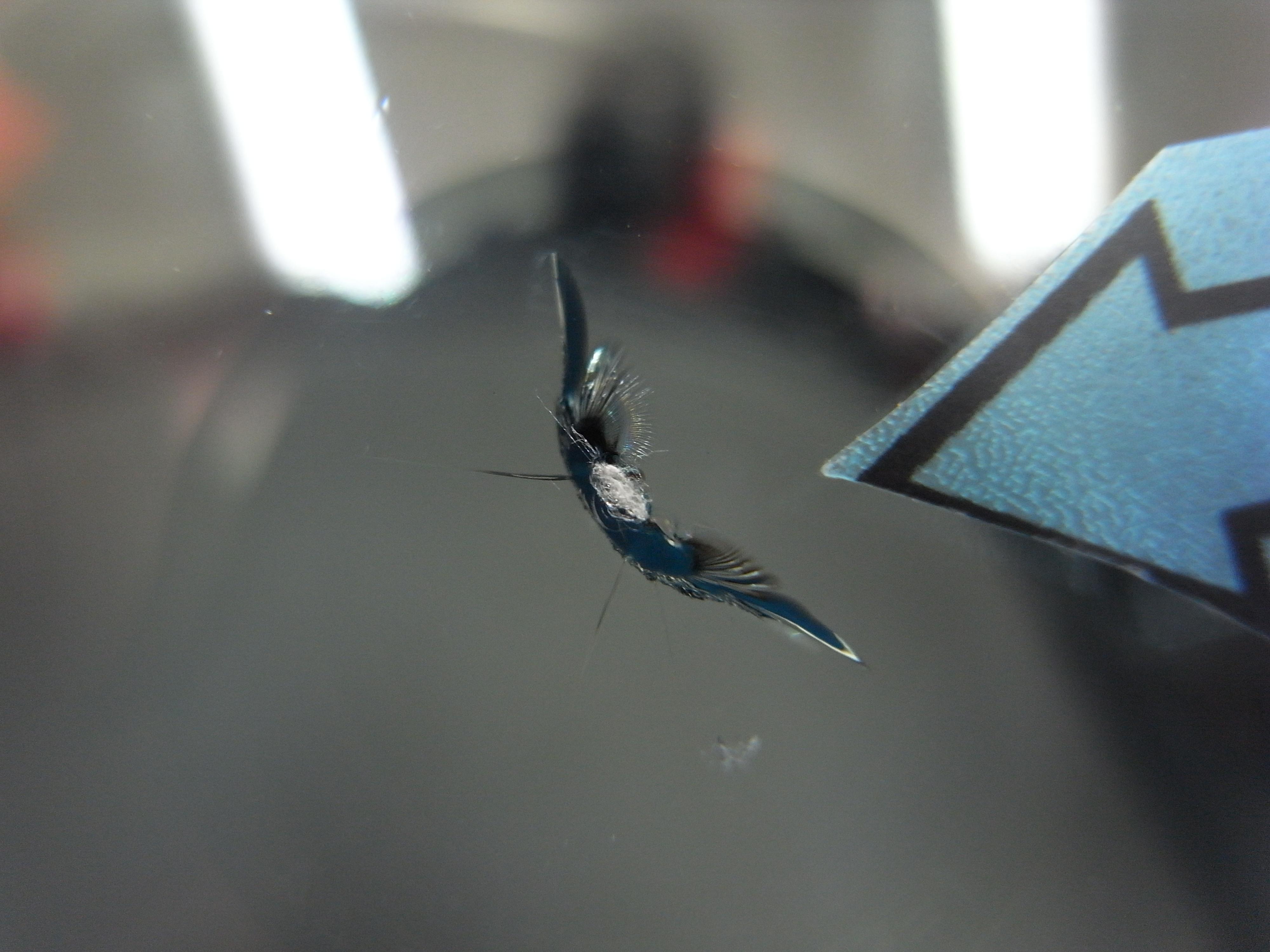 MGF フロントガラスリペア